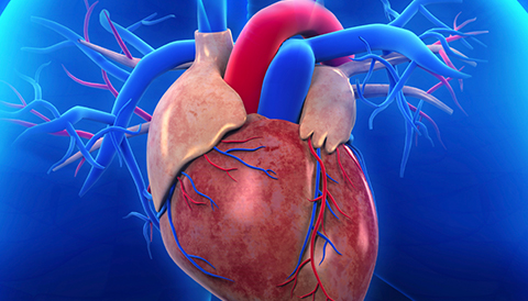 505_pulmonary_artery_480x274